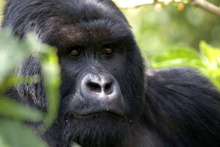 12 day Uganda self drive tour with gorilla & chimp permit